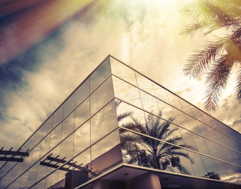 Esponga al sole splendere sulla finestra dell'ufficio con la palma che riflette in vetro immagini stock