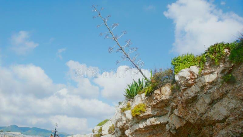 Esponga al sole sulle piante qui sopra fotografia stock libera da diritti