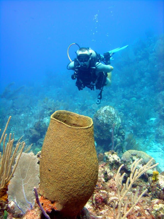 Esponja e mergulhador gigantes