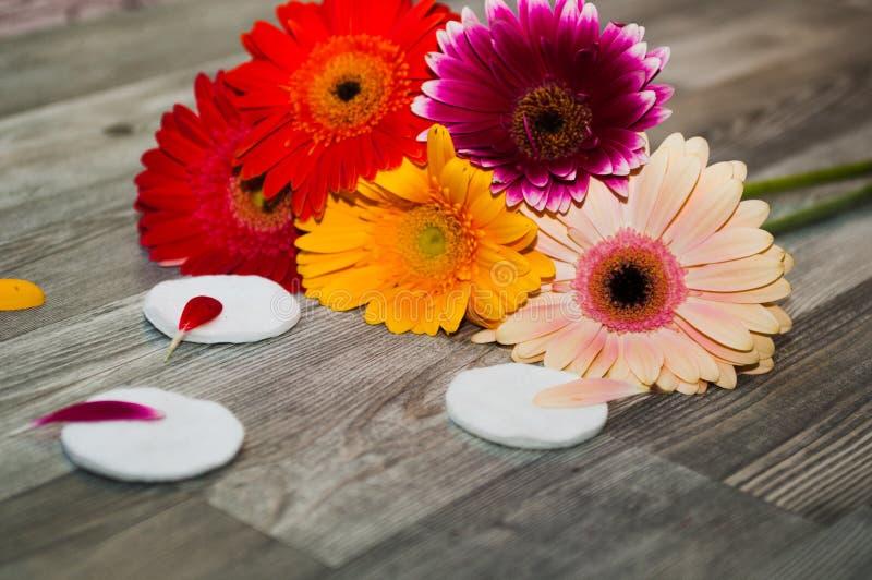Esponja para remover a composição e as flores dos gerberas bonito com composição à moda e as rosas coloridas imagens de stock royalty free