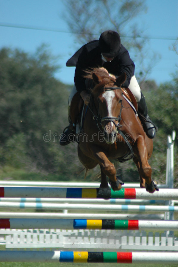 Esporte de salto do cavalo fotografia de stock royalty free