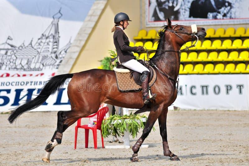 Esporte equestre. Cavaleiro fêmea do salto da mostra. foto de stock royalty free