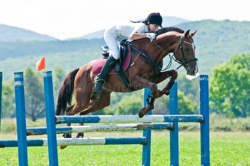 Esporte equestre. saltos fêmeas da mostra do cavaleiro fotografia de stock royalty free