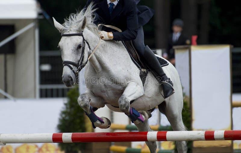 Esportes equestres, cavalo que salta, mostra que salta, equita??o imagem de stock royalty free