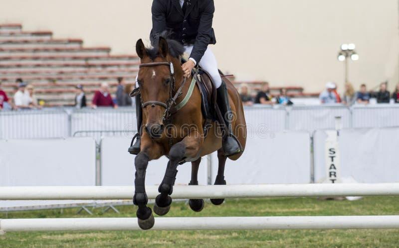 Esportes equestres, cavalo que salta, mostra que salta, equita??o imagens de stock royalty free
