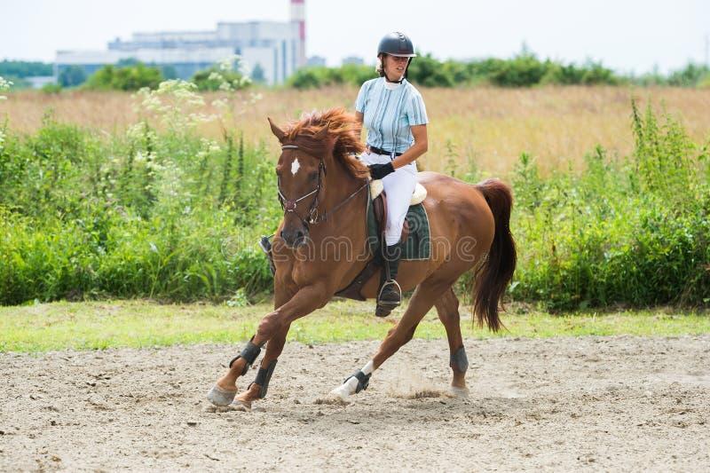 Esportes equestres, cavalo que salta, salto da mostra fotografia de stock royalty free