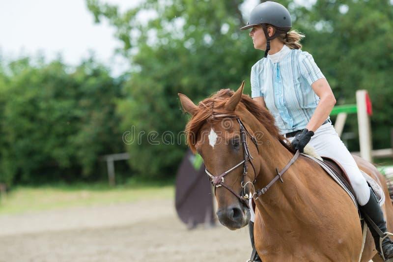 Esportes equestres, cavalo que salta, salto da mostra imagem de stock royalty free