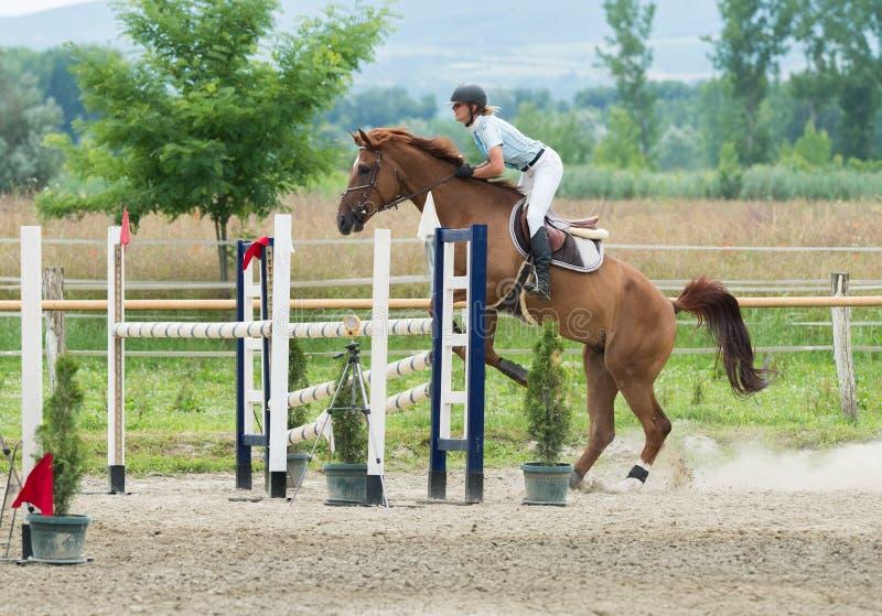Esportes equestres, cavalo que salta, salto da mostra fotos de stock