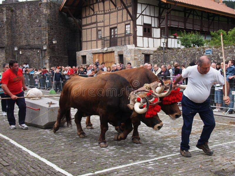 Esportes rurais Basque - probak do Idi (testes dos bois) imagens de stock royalty free