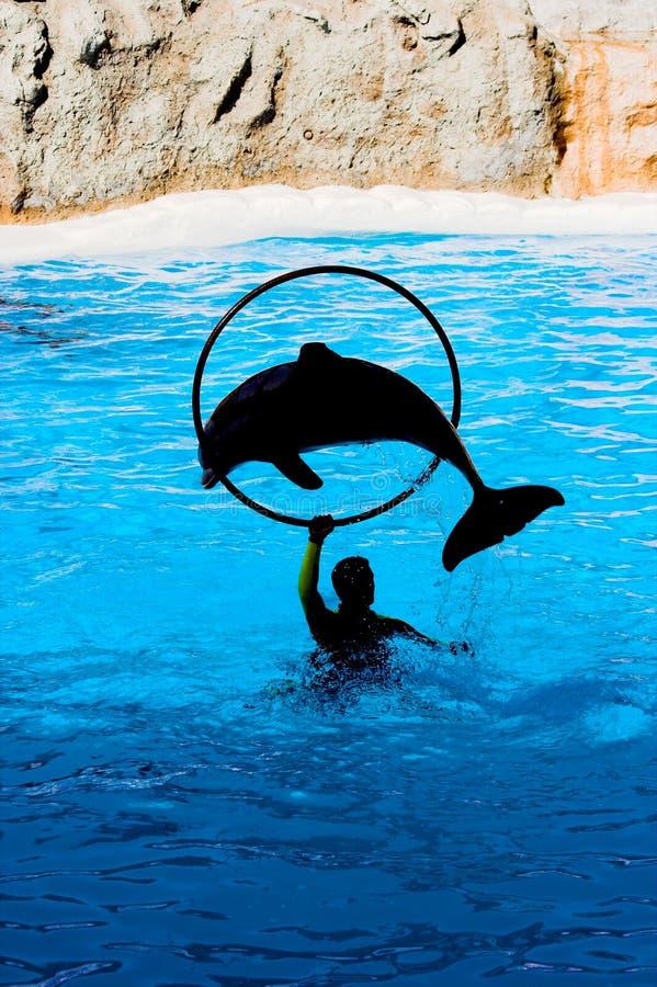 Esposizione del delfino fotografia stock