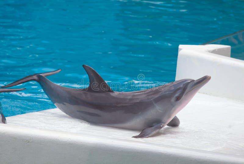 Esposizione del delfino fotografia stock libera da diritti