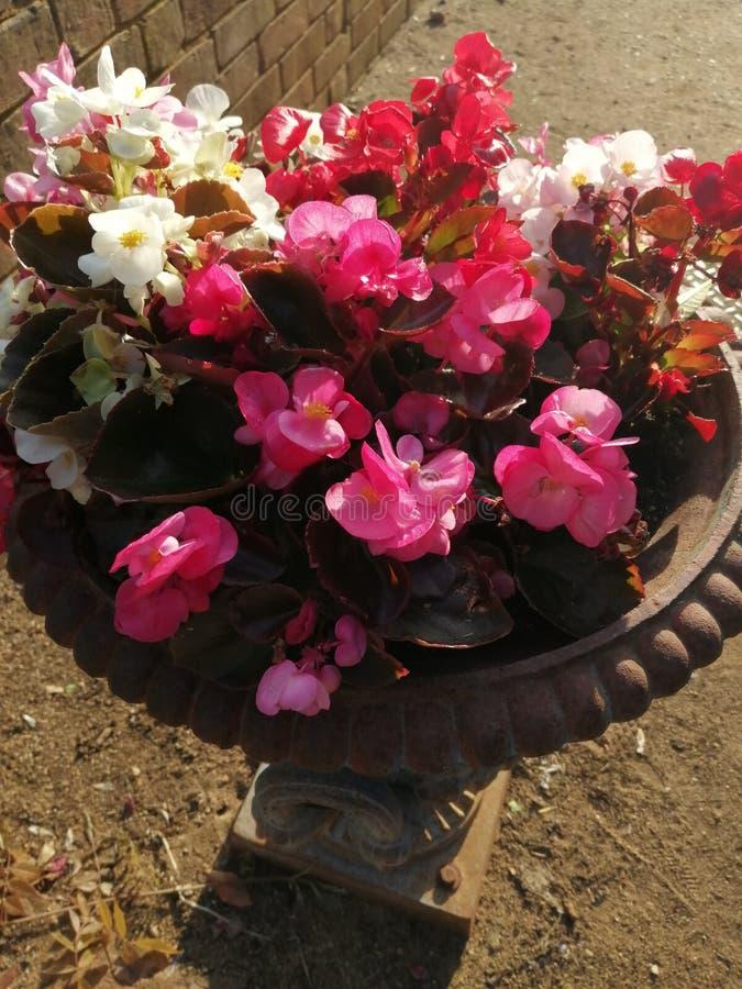 Esposizione del letto di fiore fotografie stock