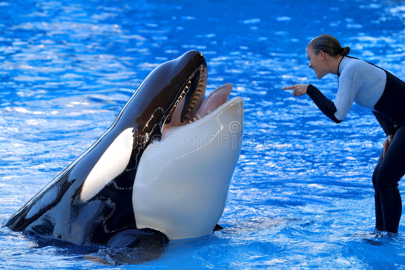 Esposizione dell'orca immagine stock libera da diritti