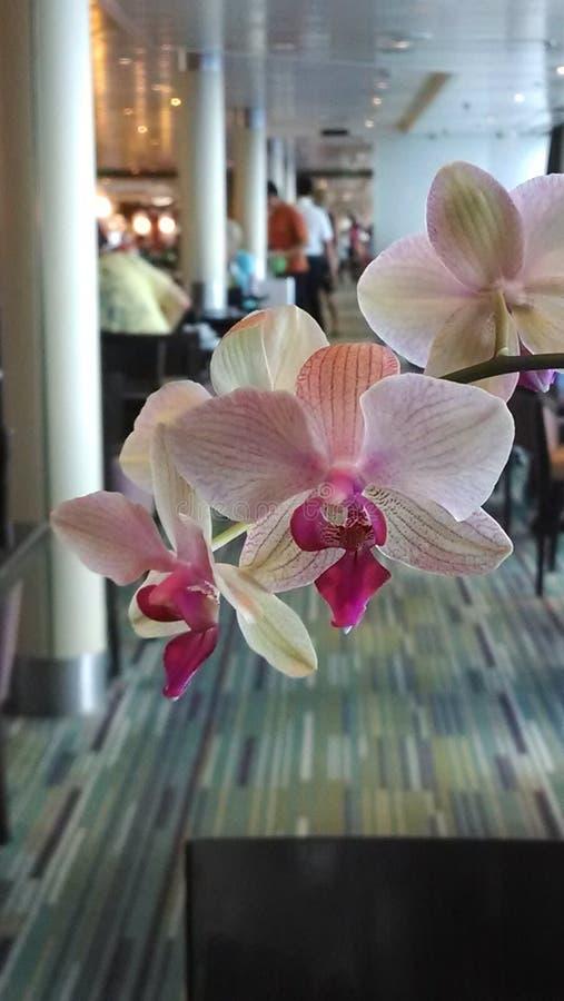 Esposizione dell'orchidea fotografie stock libere da diritti