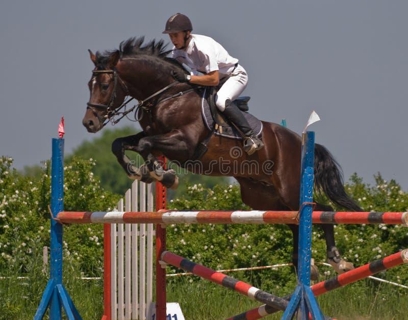 esposizione di salto del cavallo fotografia stock