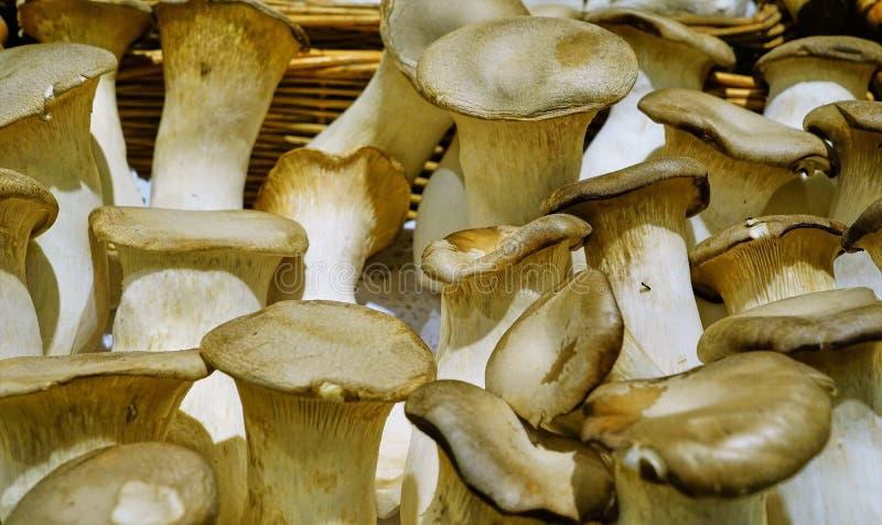 Esposizione fresca grassottella dei funghi fotografia stock libera da diritti