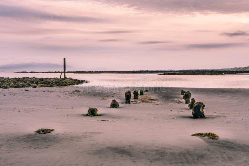 Esposizione lunga di una spiaggia sabbiosa bagnata un giorno nuvoloso nuvoloso In vista sono i ceppi corrosi consumati che attacc fotografie stock libere da diritti