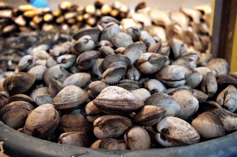 Esposizione tradizionale del mercato dei frutti di mare in piatto dei curles di Tegucigalpa fotografia stock