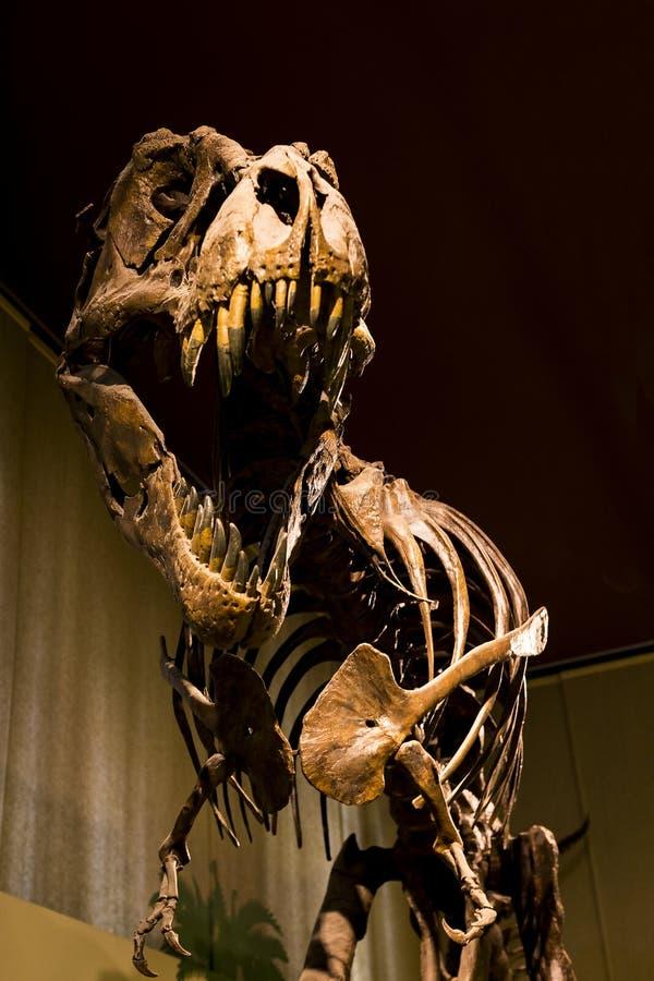 Esposizioni degli animali preistorici del dinosauro nel museo di storia naturale a Milano fotografia stock