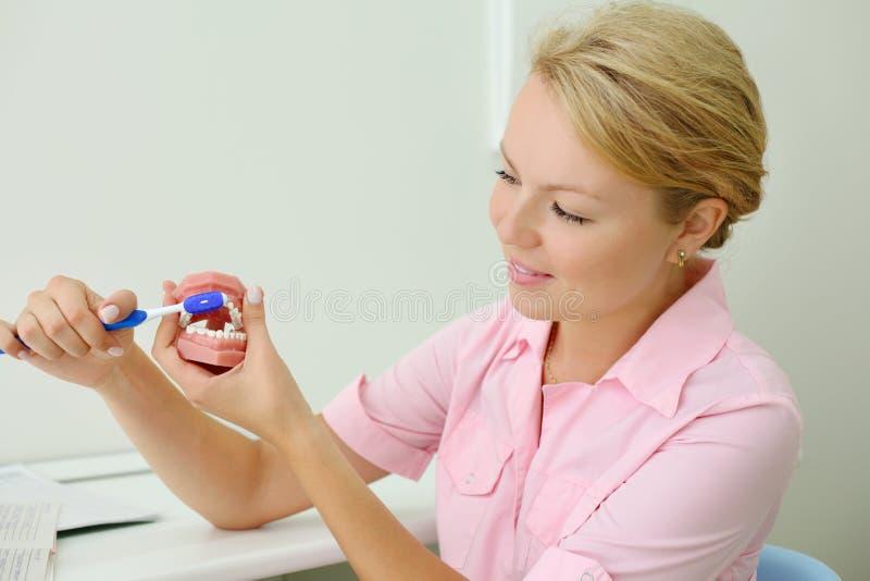 Esposizioni del dentista come pulire correttamente i denti fotografie stock libere da diritti