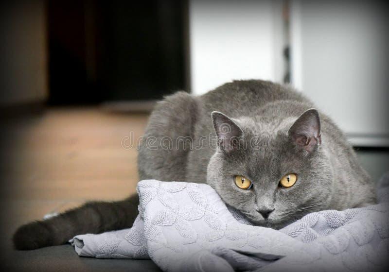 Espreitamento do gato fotografia de stock royalty free