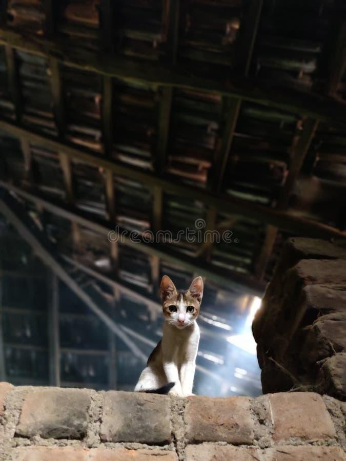 Espreitando o gato fotografia de stock