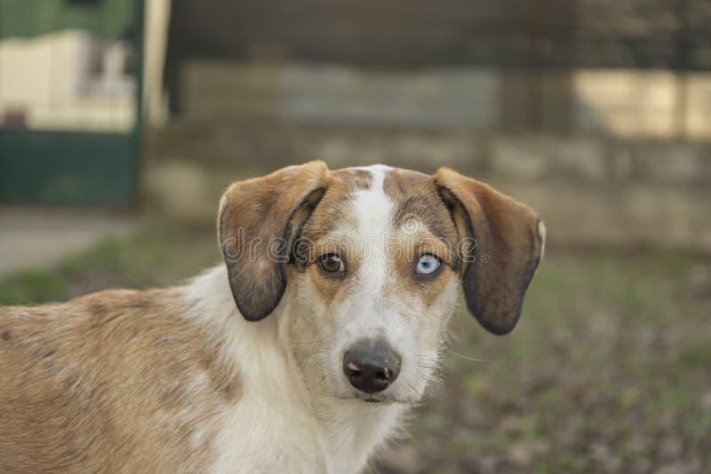 Espressione facciale divertente del ritratto del cane fotografia stock