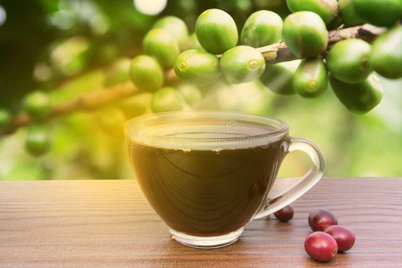 Espresso för kaffekopp i framen arkivfoton
