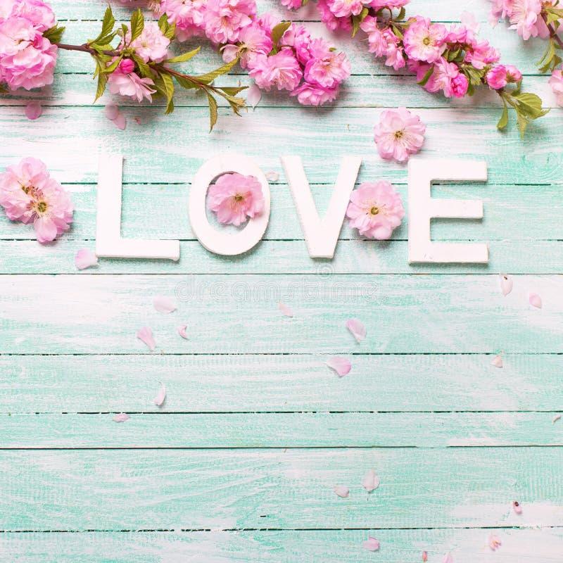 Esprima l'amore e confini dai fiori rosa della mandorla sul legno del turchese immagine stock