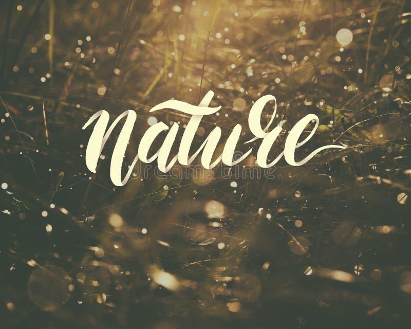Esprima la natura su fondo astratto con le lame di erba fotografie stock libere da diritti