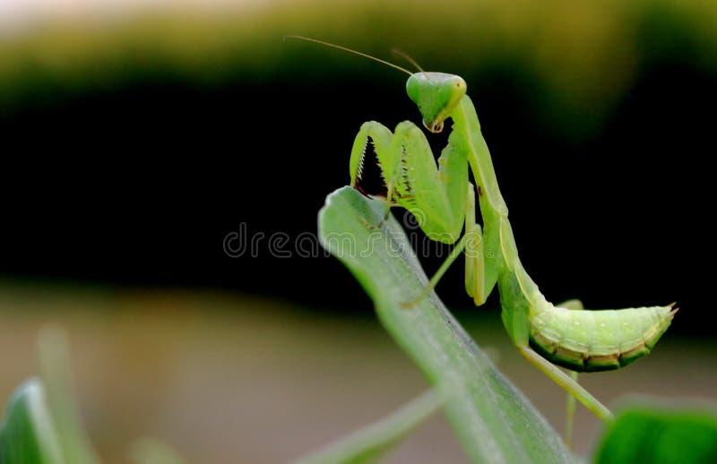 Esprit d'insecte photos libres de droits