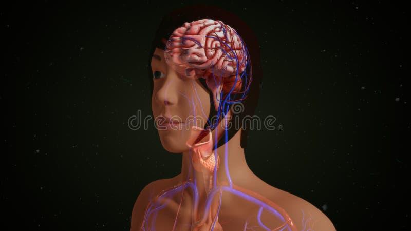 Esprit humain image stock