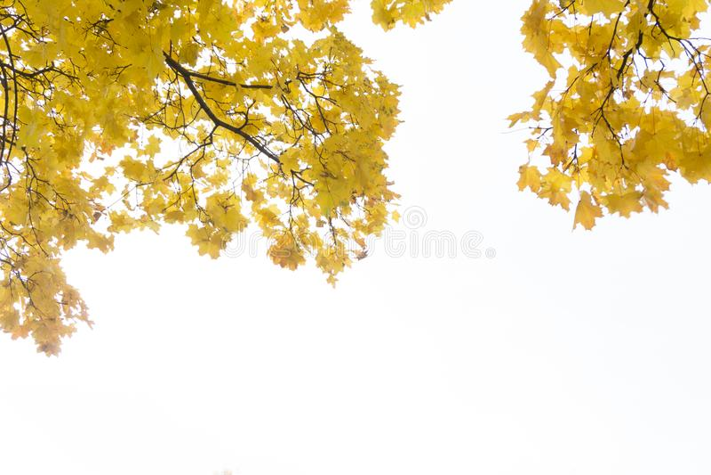 Esptakken in de herfst tegen de blauwe hemel royalty-vrije stock afbeelding