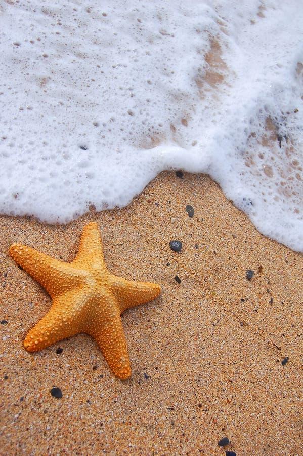 Espuma dos Starfish e do mar imagem de stock