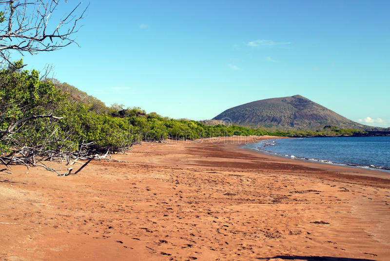 Espumillastrand met rode spookkrabben, Santiago Island, de Galapagos stock afbeelding