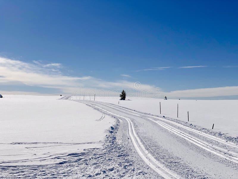 Esquí del campo a través foto de archivo libre de regalías