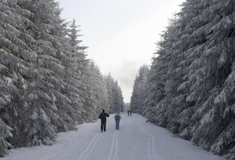Esquí en un bosque nevoso del invierno imagen de archivo