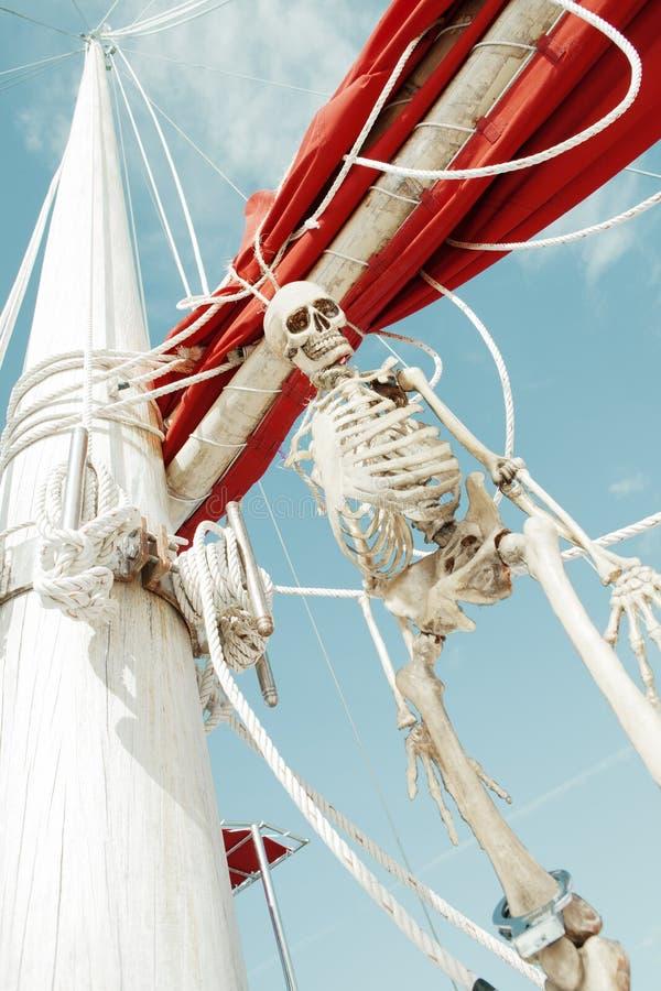 esqueleto imagem de stock