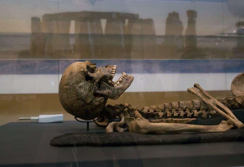 Esqueleto bien preservado de un ser humano, museo británico imagen de archivo