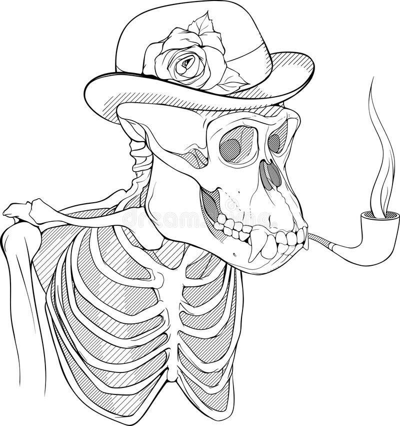 Esqueleto Blanco Y Negro Del Tubo Que Fuma Del Gorila Ilustración ...