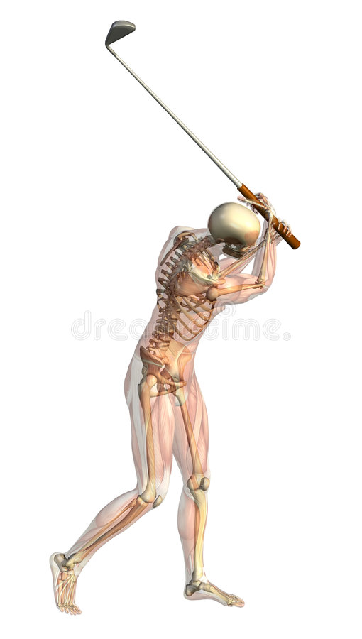 Esqueleto con los músculos semitransparentes - golf Swin stock de ilustración