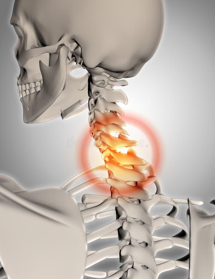 esqueleto 3D com o pescoço destacado ilustração stock