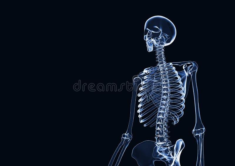 Esqueleto 3d de la RADIOGRAFÍA rendido con el espacio de la copia stock de ilustración