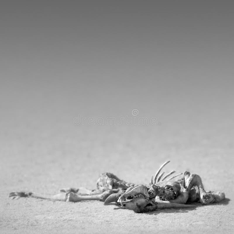 Esqueleto De Eland No Deserto Fotos de Stock Royalty Free