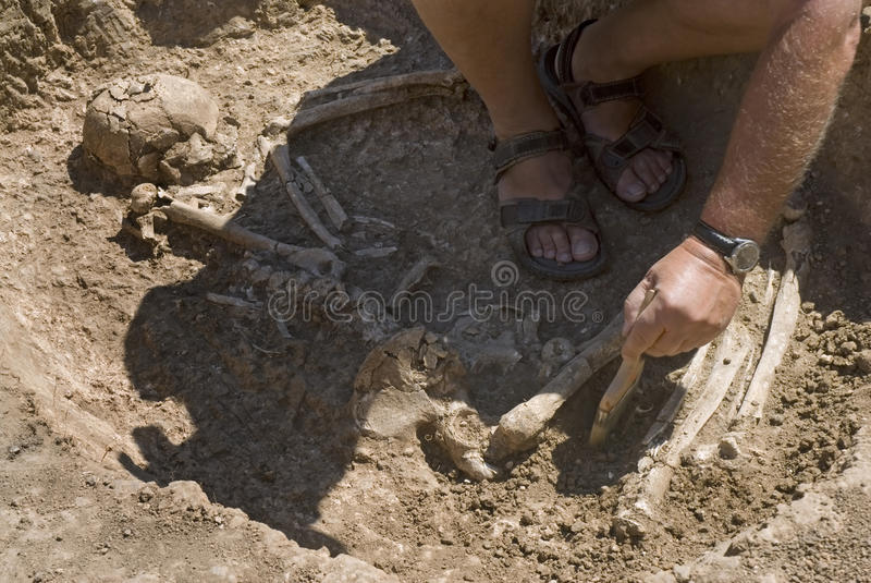 Esqueleto de excavación del arqueólogo fotos de archivo
