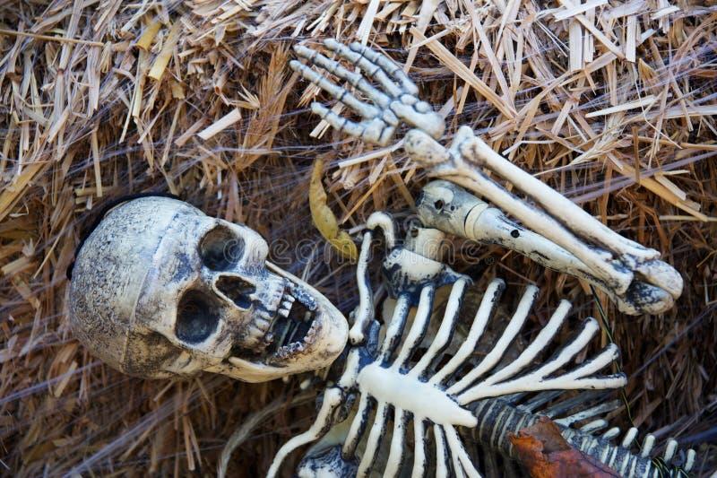 Esqueleto de Halloween imagens de stock royalty free
