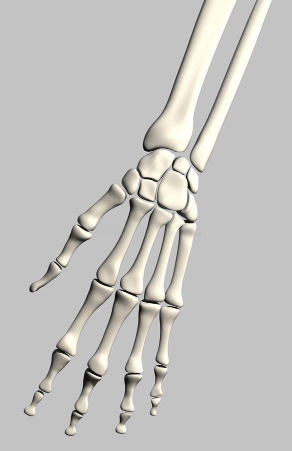 Esqueleto de la mano stock de ilustración. Ilustración de gris ...