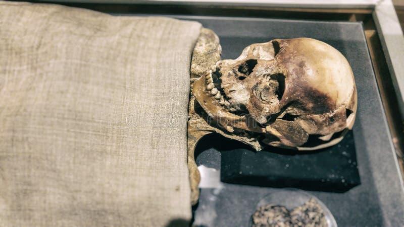 Esqueleto de la momia imagen de archivo