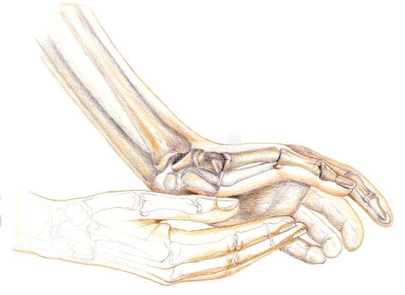Esqueleto de las manos imágenes de archivo libres de regalías
