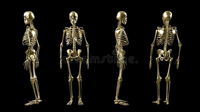 Esqueleto de oro 3D aislado ilustración del vector